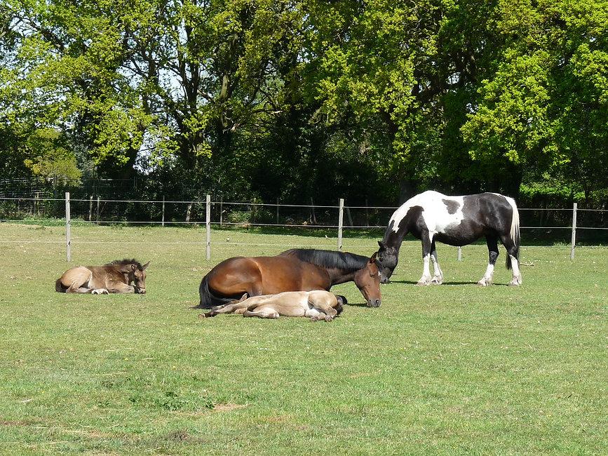 girls and foals.JPG