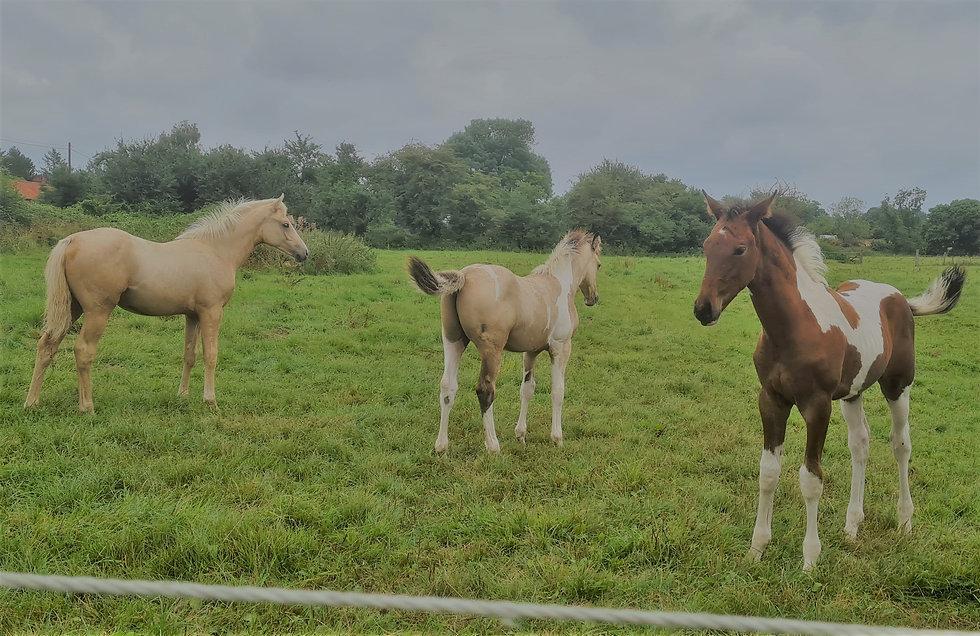 foals 2021.jpg