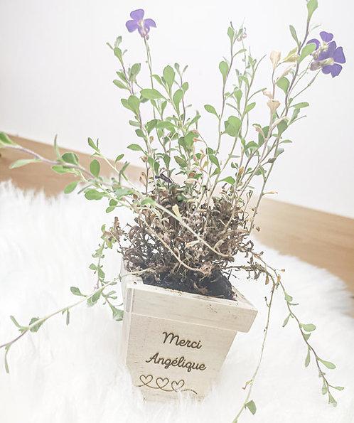 Petit pot de fleur avec graine