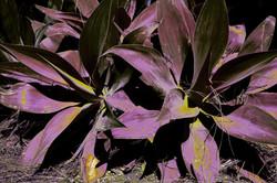 Plants Balboa Park.jpg