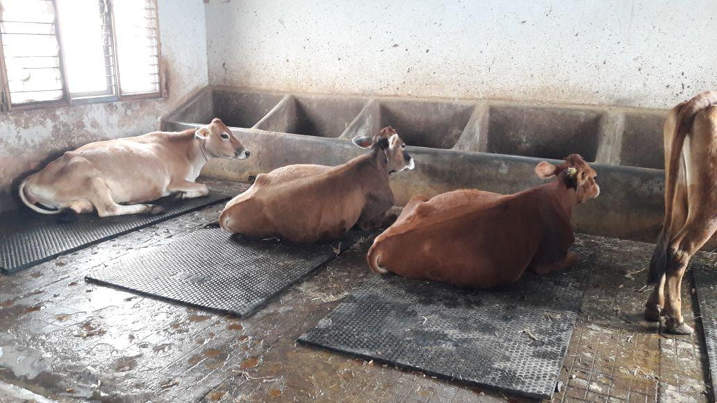 Rubber Cow Mats Manufacturers