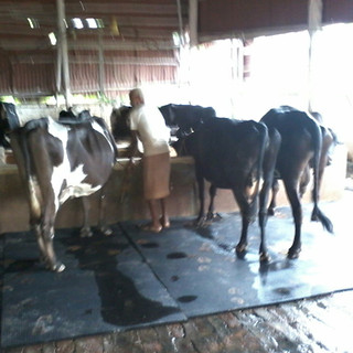 Cow Comfort Mats