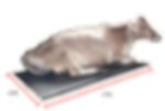 Cow mats