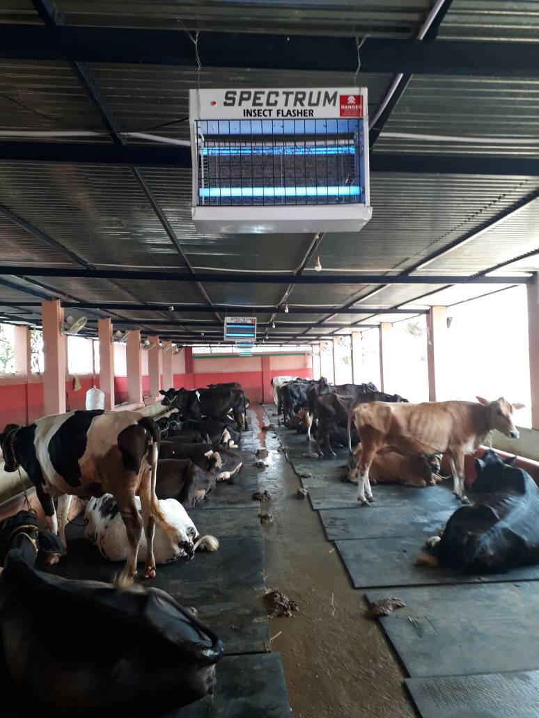 Cattle Comfort Mats