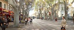 IlexTram_Avignon1