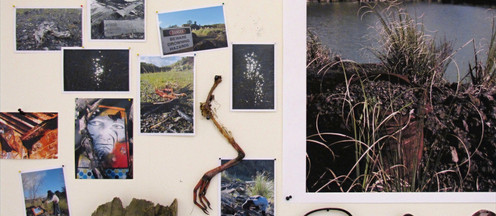 Installation detail Objects and images from Port Albert quarry