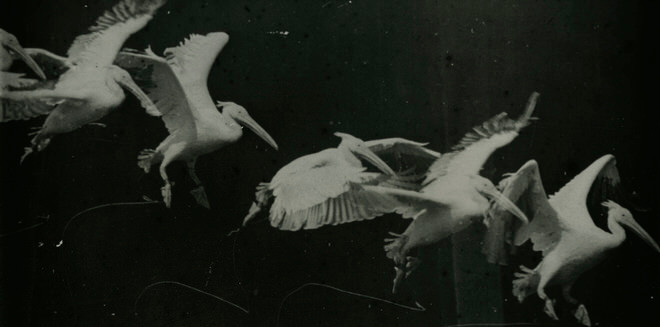 Photo prise en 1882