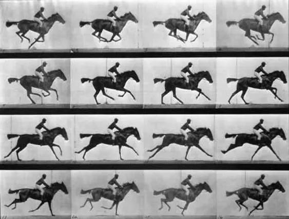 le galop, E. Muybridge - 18 juin 1878