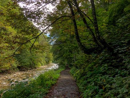 Shirakami Sanchi - UNESCO beech forest