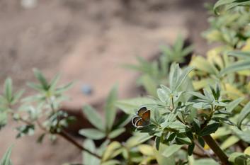 Butterfly - Santa Fe, New Mexico, USA