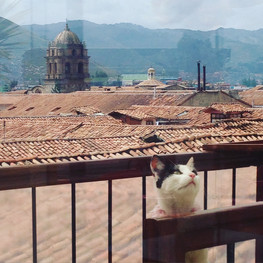 Cat - Cuzco, Perú