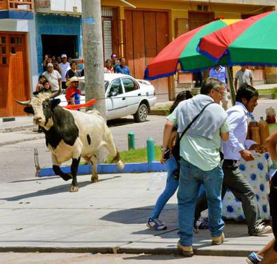 Corrida del Toro - Perú