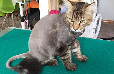 Katzenschur.jpg