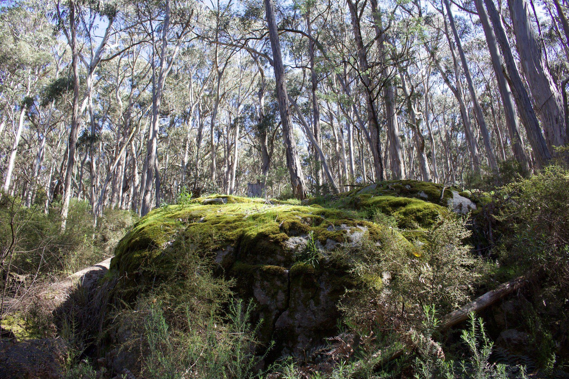 Save The Tallarook Forest