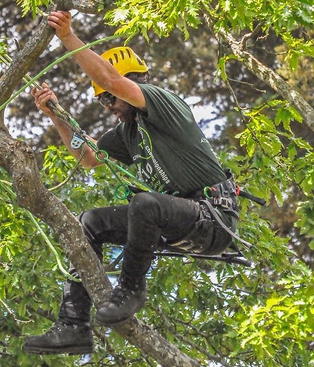 Victorian Tree Industry Organisation Annual Tree Climbing Competition
