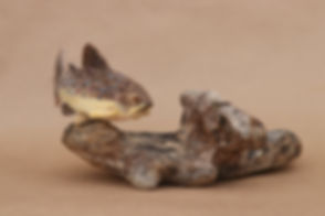BrownTroutandStonefly-11.jpg