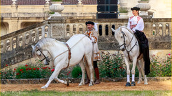 Symphonie Equestre-19 Mai 2018-7894