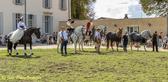 Spectacle_Equestre_du_23_Août_2020--8-2