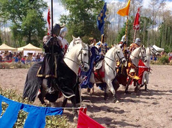 chevaliers de profil
