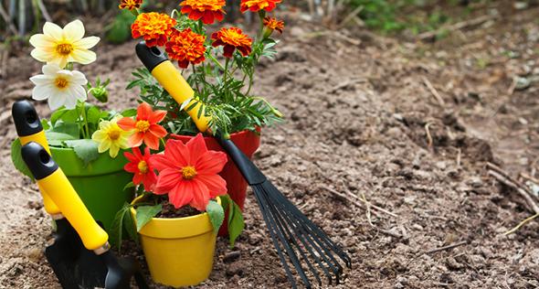 Resultado de imagem para Como preparar seu jardim para o outono