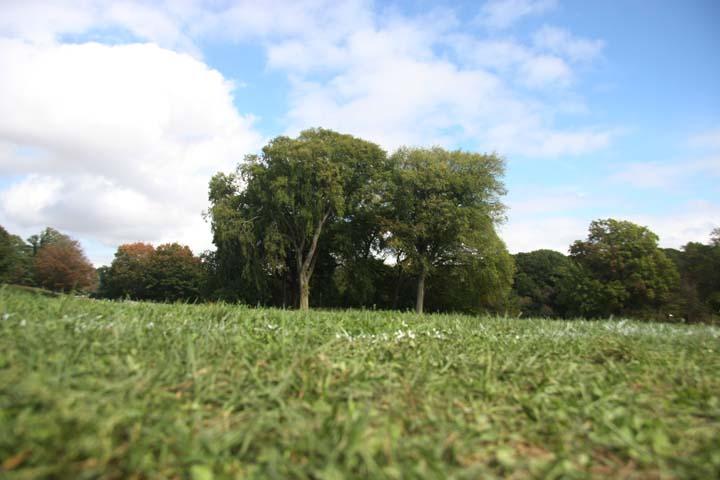 Trees, Prospect Park