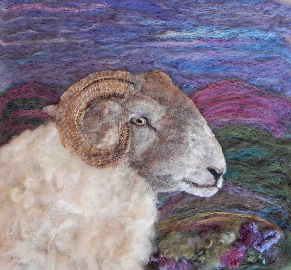 Hill Radnor sheep portrait