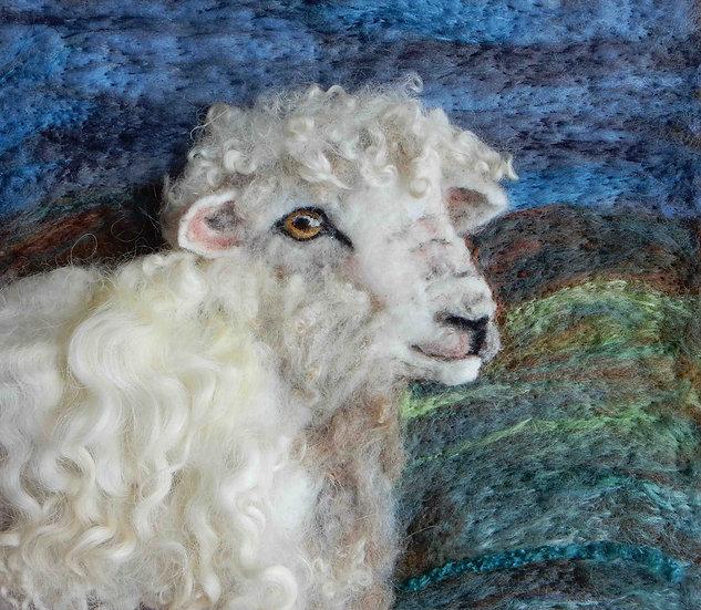 Devon and Cornwall Longwool sheep portrait