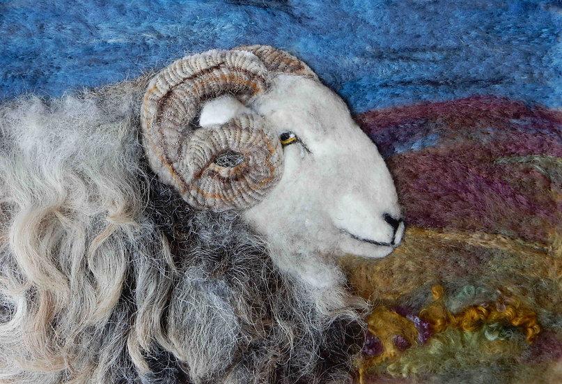 Herdwick ram portrait