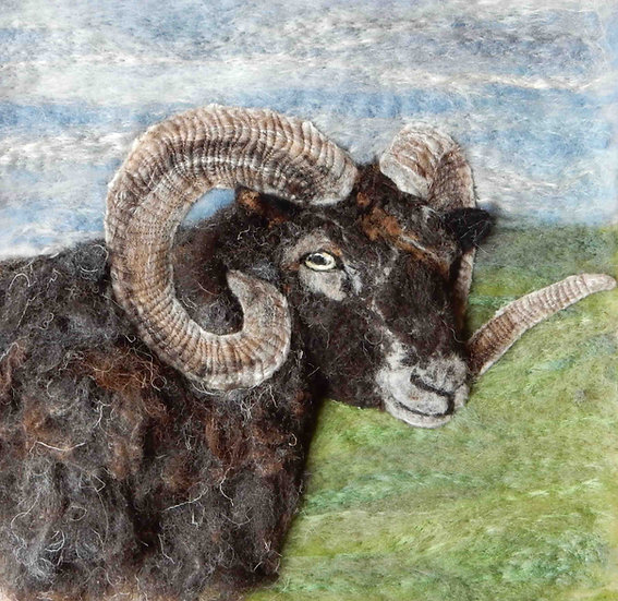 Mars the Boreray ram