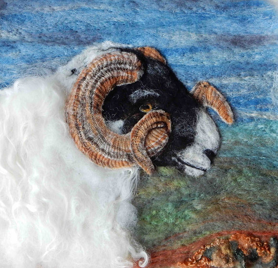 Scottish Blackface ram portrait