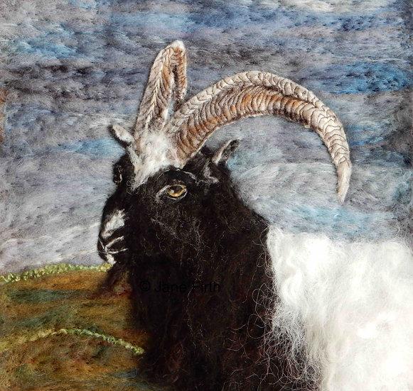 Bagot goat fibre art portrait
