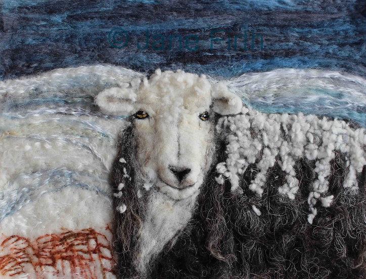 Herdwick ewe in the snow