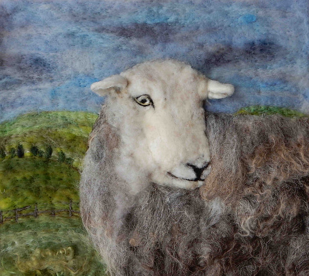 Herdwick ewe portrait