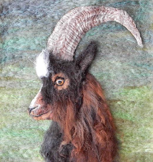 Bagot Goat portrait