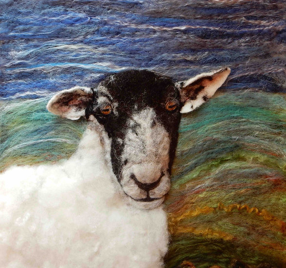 North Country Mule sheep portrait