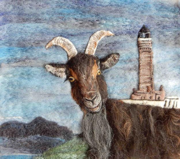 Ardnamurcahn feral goat portrait