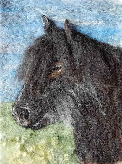 Cumbrian Fell pony portrait profile
