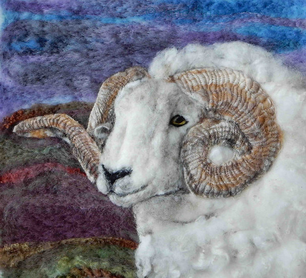 Exmoor Horn sheep portrait