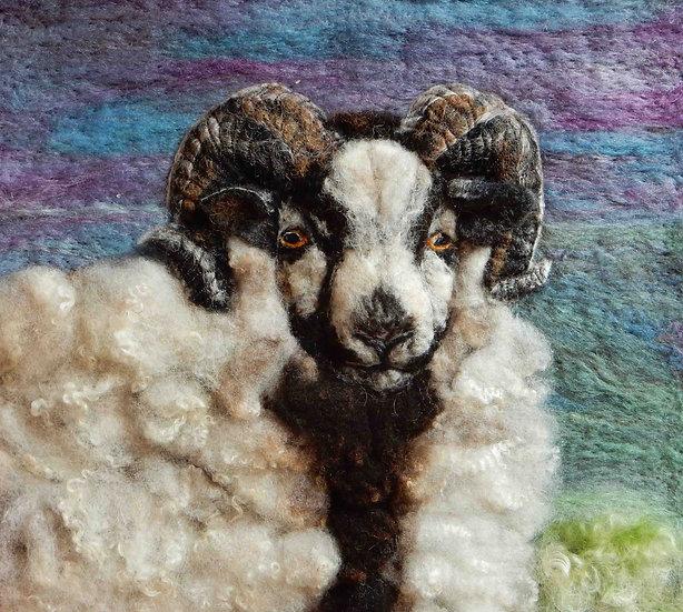 Katmoget Shetland sheep portrait