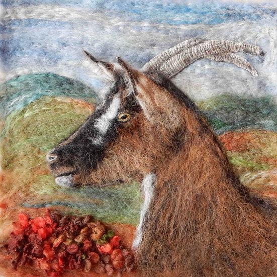 English Goat portrait in profile