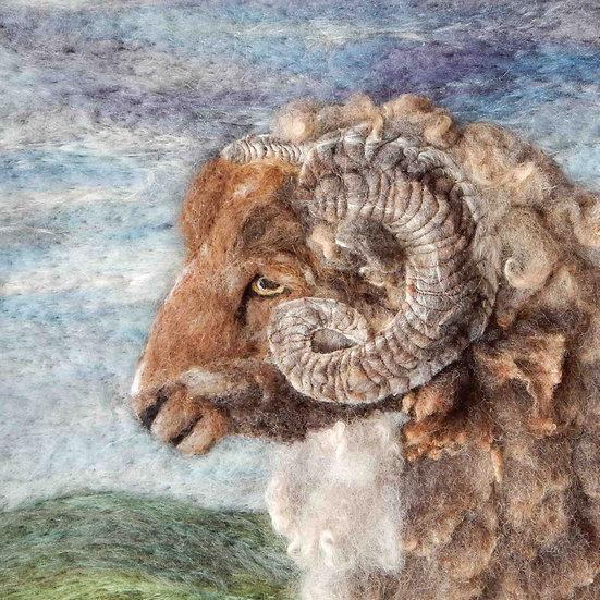 Skudde sheep