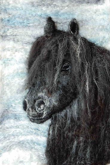Cumbrian Fell pony portrait