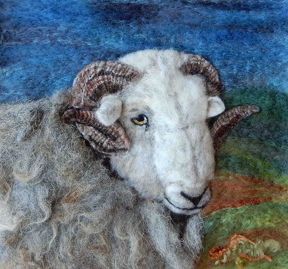 Old Herdwick ram