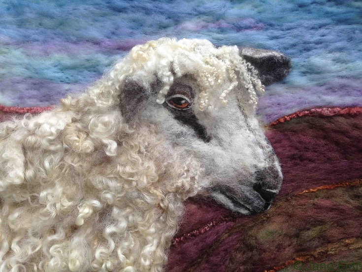 Wensleydale sheep greetings card