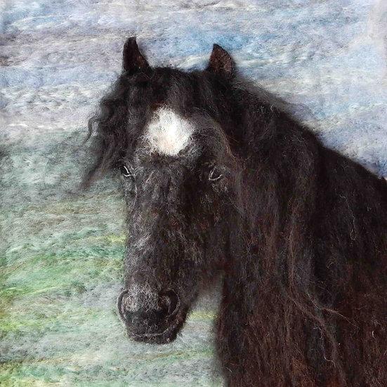 Iris the Fell pony, portrait from a photograph by Fleur Hallam