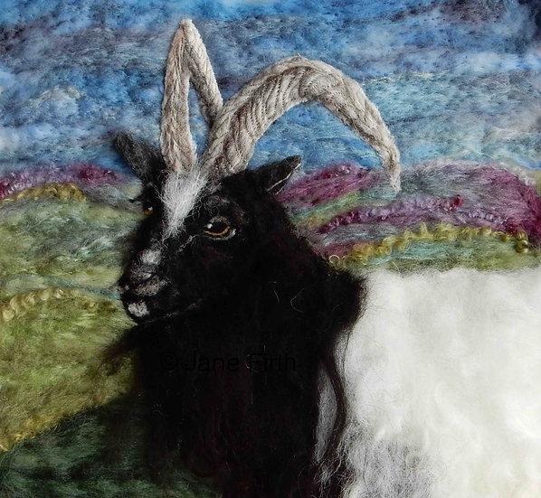Bagot Goat 2