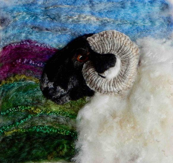 Scottish Blackface sheep portrait