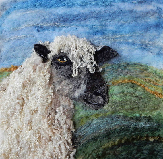 Wensleydale sheep portrait