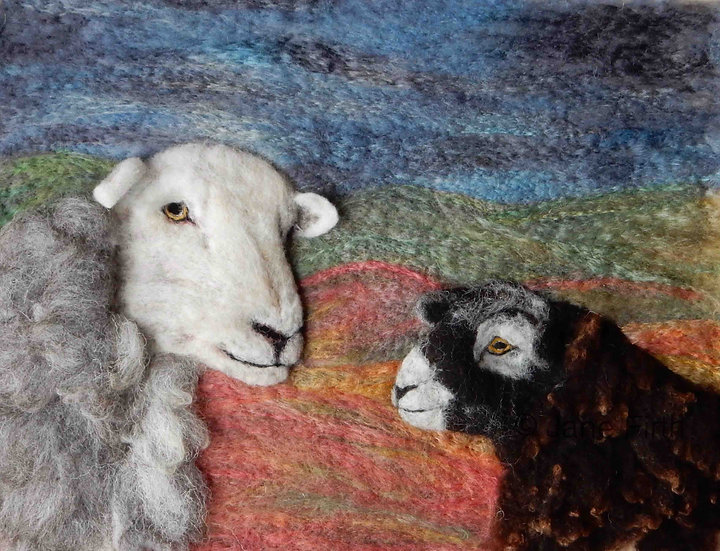 Herdwick ewe and lamb portrait