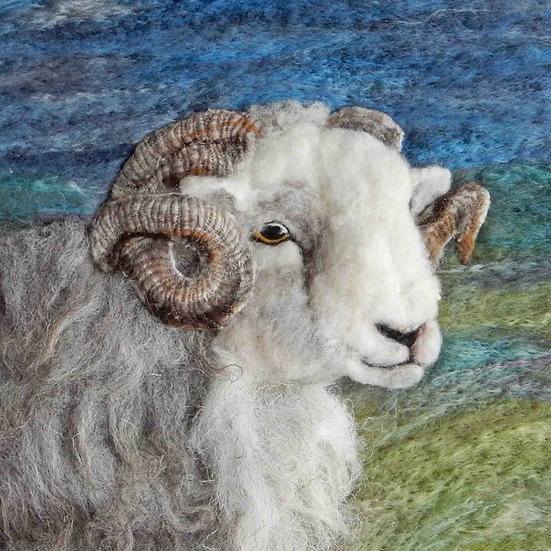 Ullswater Herdwick ram portrait